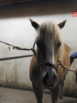 23-10-2015 | Stichting laat paardendroom uitkomen